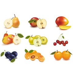 group with different fruit vector image vector image