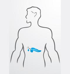Pancreas and human body - vector