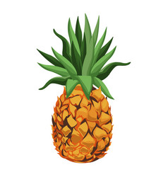 pineapple fruit tropical food image vector image