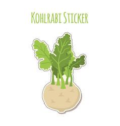green kohlrabi sticker cabbage fresh organic vector image vector image