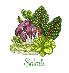 Salads and leafy vegetables poster vector