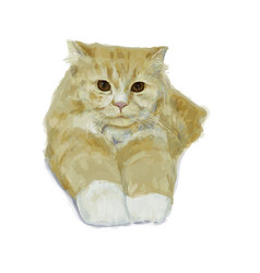 Adorable persian cat lying and stretching leg on vector