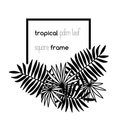 Square copyspace frame with palm leaves vector