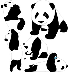 Panda babies silhouettes vector image
