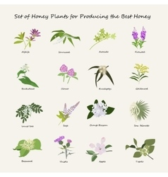 Honey planty set vector
