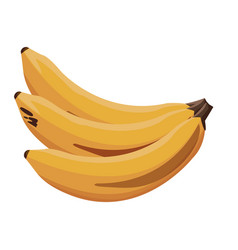Banana fruit tropical food image vector