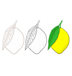 lemon hand drawn sketch vector image