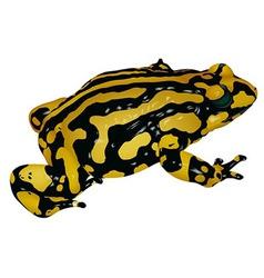 Black yellow frog vector