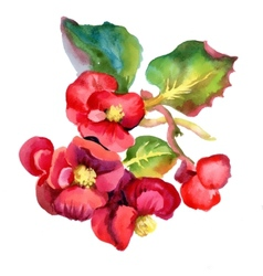 Colorful watercolor red flowers vector