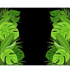 Green tropical leaves on a black background vector image vector image