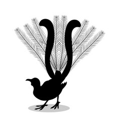 lyrebird bird black silhouette animal vector image