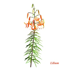 The unique lilium vector
