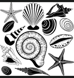 Shells collection vector