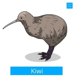 Kiwi learn birds educational game vector