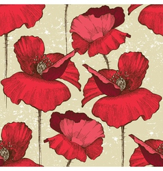 poppy flowers vector image