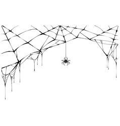 black spider and torn web scary spiderweb of vector image