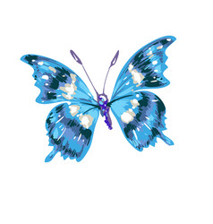 colorful abstract watercolor butterfly on a white vector image vector image
