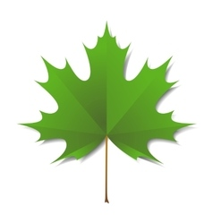 Maple green leaf vector image