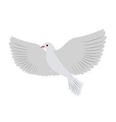 gorgeous white dove flies and spreads large wings vector image