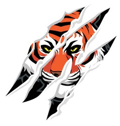 tiger claw mark vector image vector image