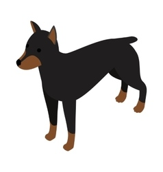 Doberman dog icon isometric 3d style vector