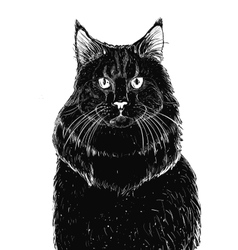 Sitting blak cat vector