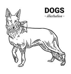 dog hand drawn drawing engraving vector image