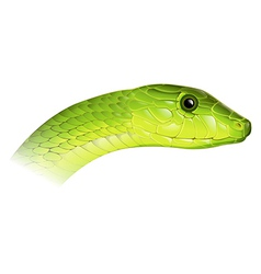 Eastern Green Mamba vector image