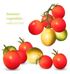 growing tomatoes realistic isolated on vector image vector image