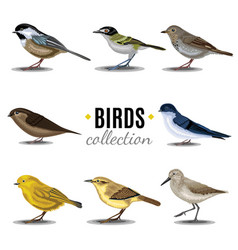 birds collection sandpiperswallowtrush vauxs-swift vector image
