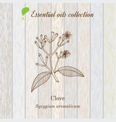Clove essential oil label aromatic plant vector