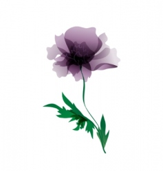 Violet peony flower vector