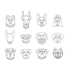 Popular breeds of dogs 12 linear icons isolated vector