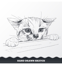 Hand drawn cat face sketched playful kitten vector