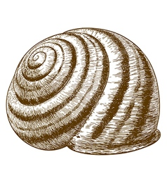 Engraving striped snail shell vector