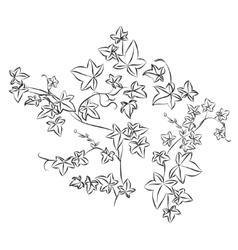 Black doodle ivy leaves vector
