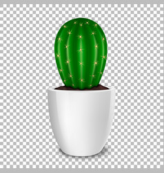realistic decorative cactus plant in white flower vector image vector image
