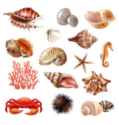 seashell realistic set vector image