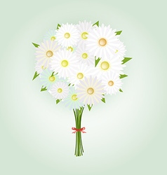Chamomile flower or white daisy daisy bouquet vector