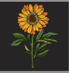 Hand drawn daisy flower with stem and leaves vector