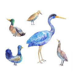 Set of birds living in a swamp heron bittern vector