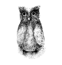 Owlet drawing vector