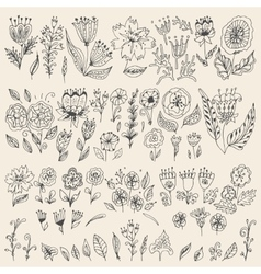 Set of hand drawn flowers and leaves vector