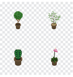 Isometric flower set of grower peyote fern and vector