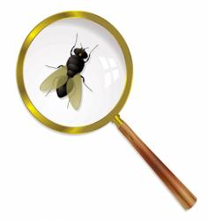 magnify fly vector image vector image