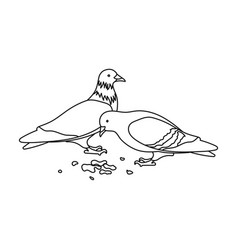 pigeonold age single icon in outline style vector image vector image