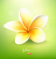 Plumeria flower on nature background vector