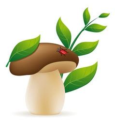 Mushroom cep vector