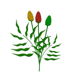 Fresh zingiber zerumbet plant on white background vector
