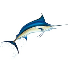 Blue marlin vector
